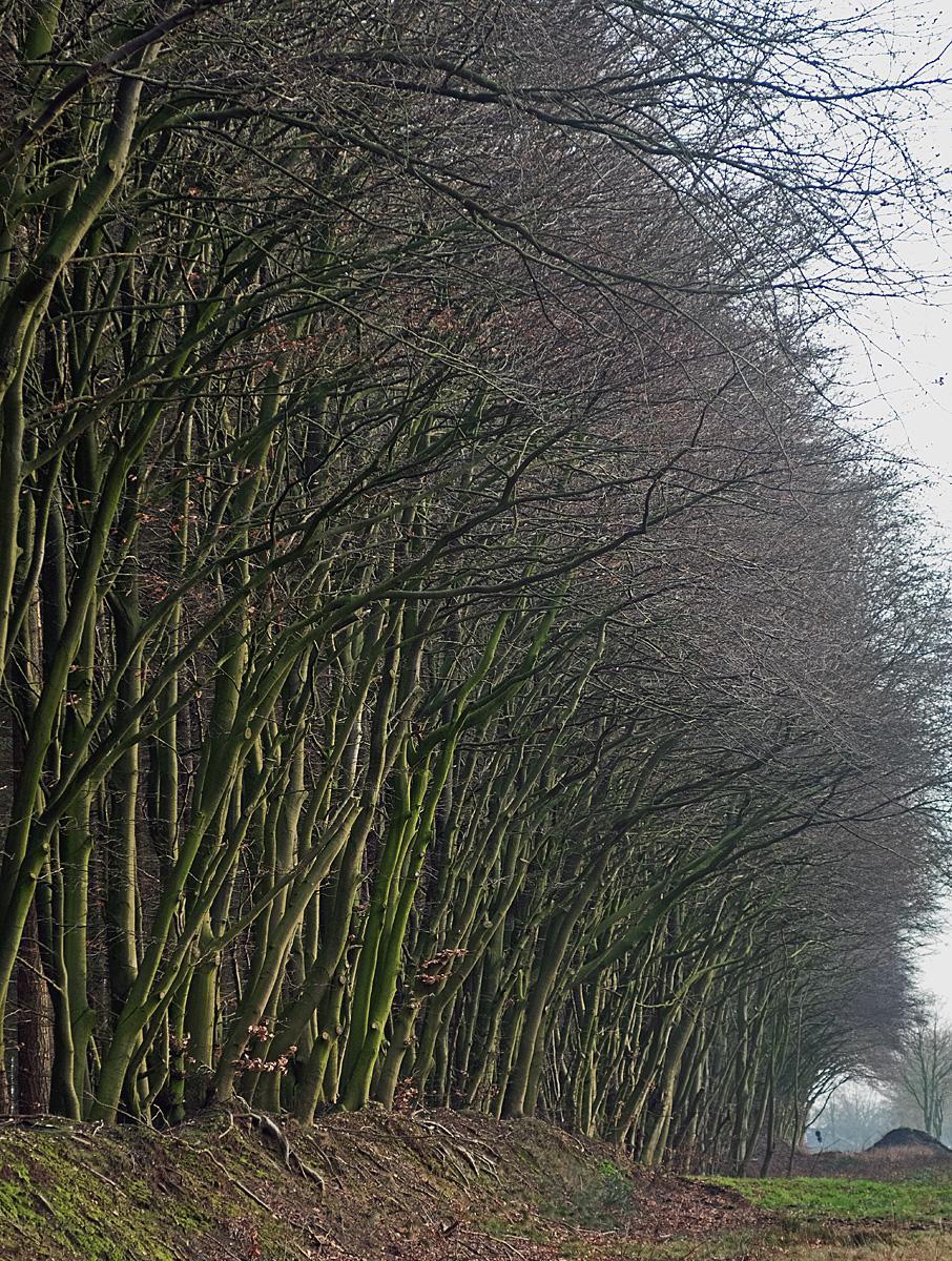 bäume 2.jpg