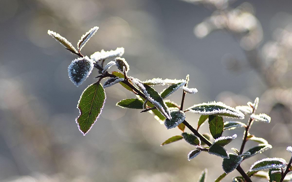 frost 2.jpg