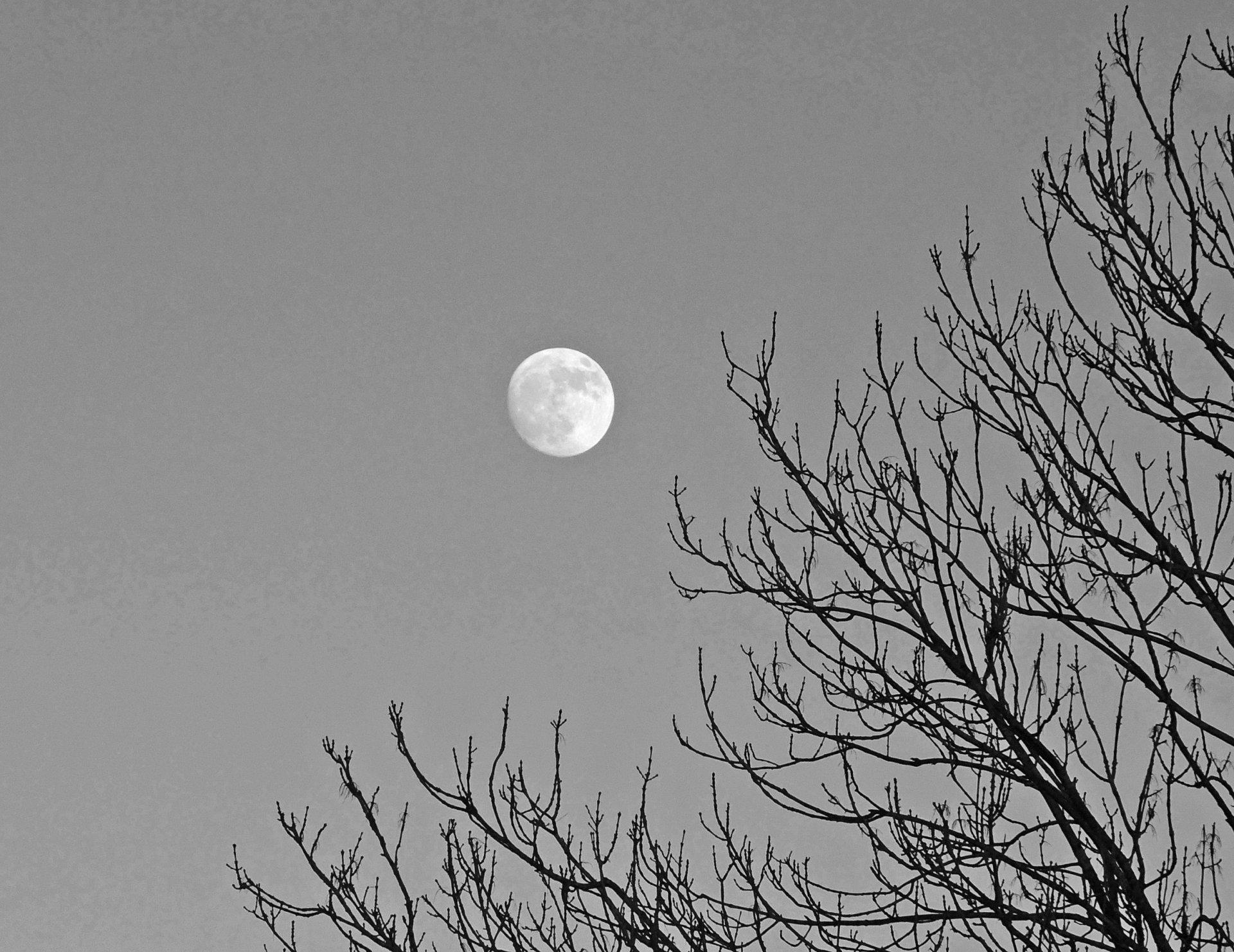 Mond - Kopie.jpg